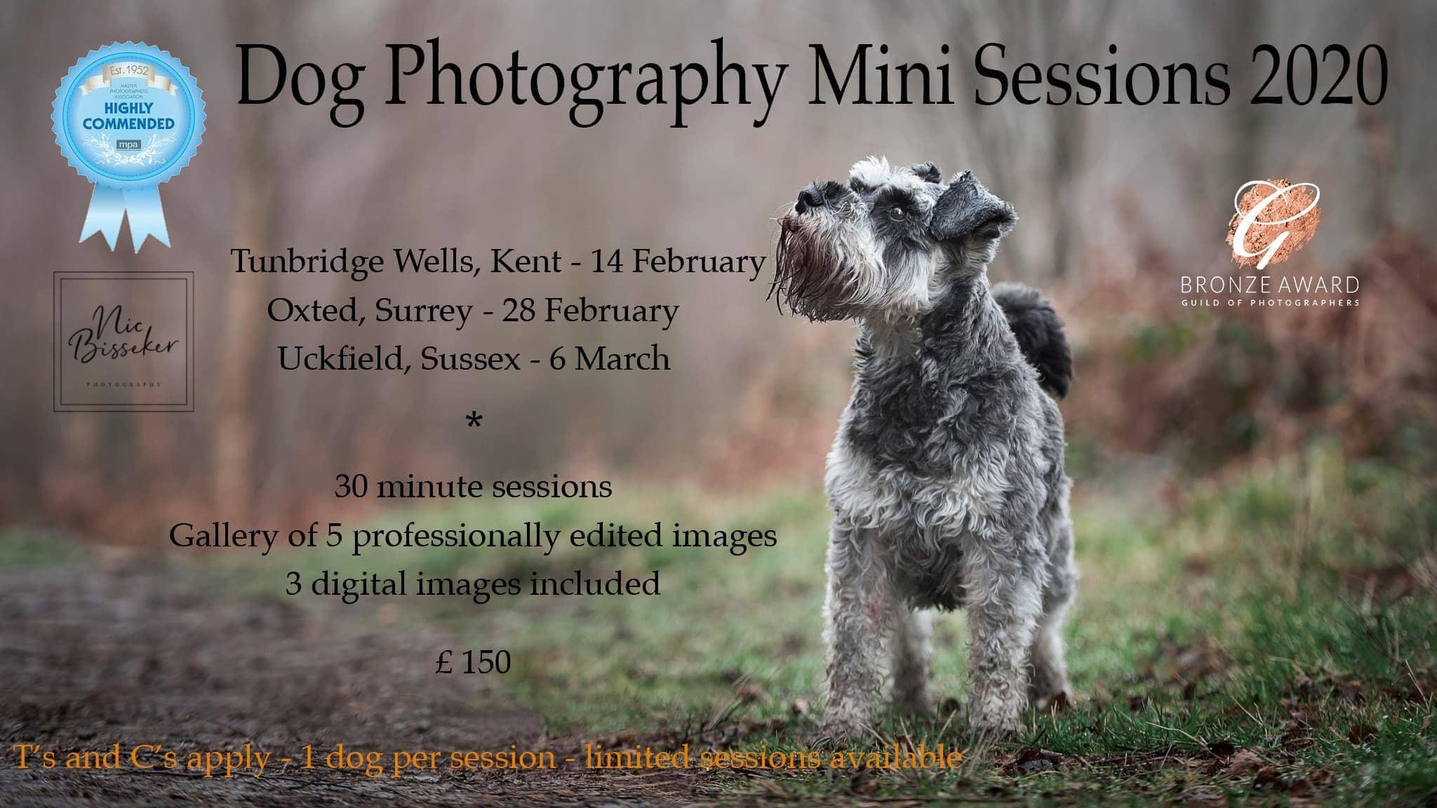 Dog photoshoot Tunbridge Wells Oxted Uckfield