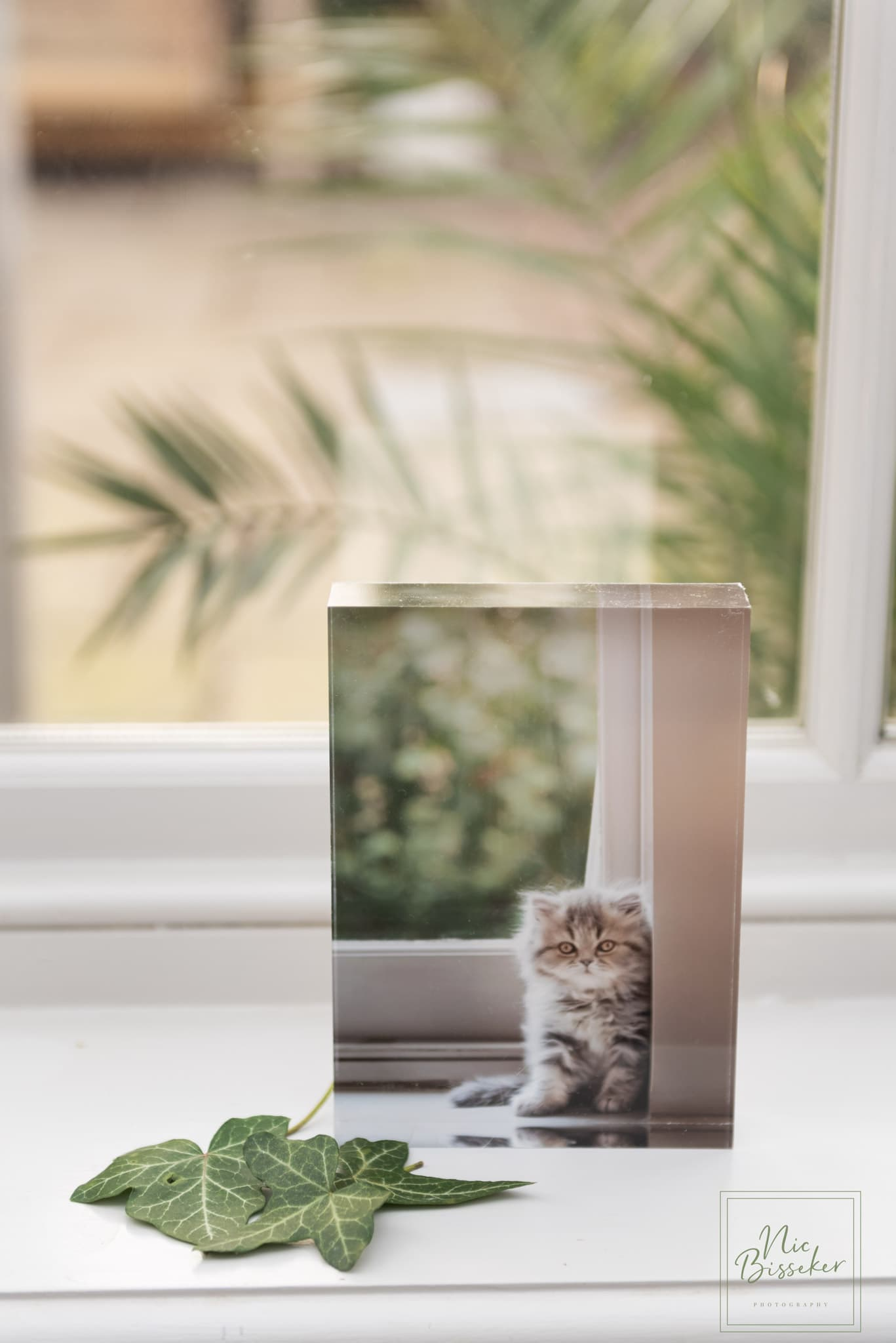nic bisseker photography cat photographer east grinstead