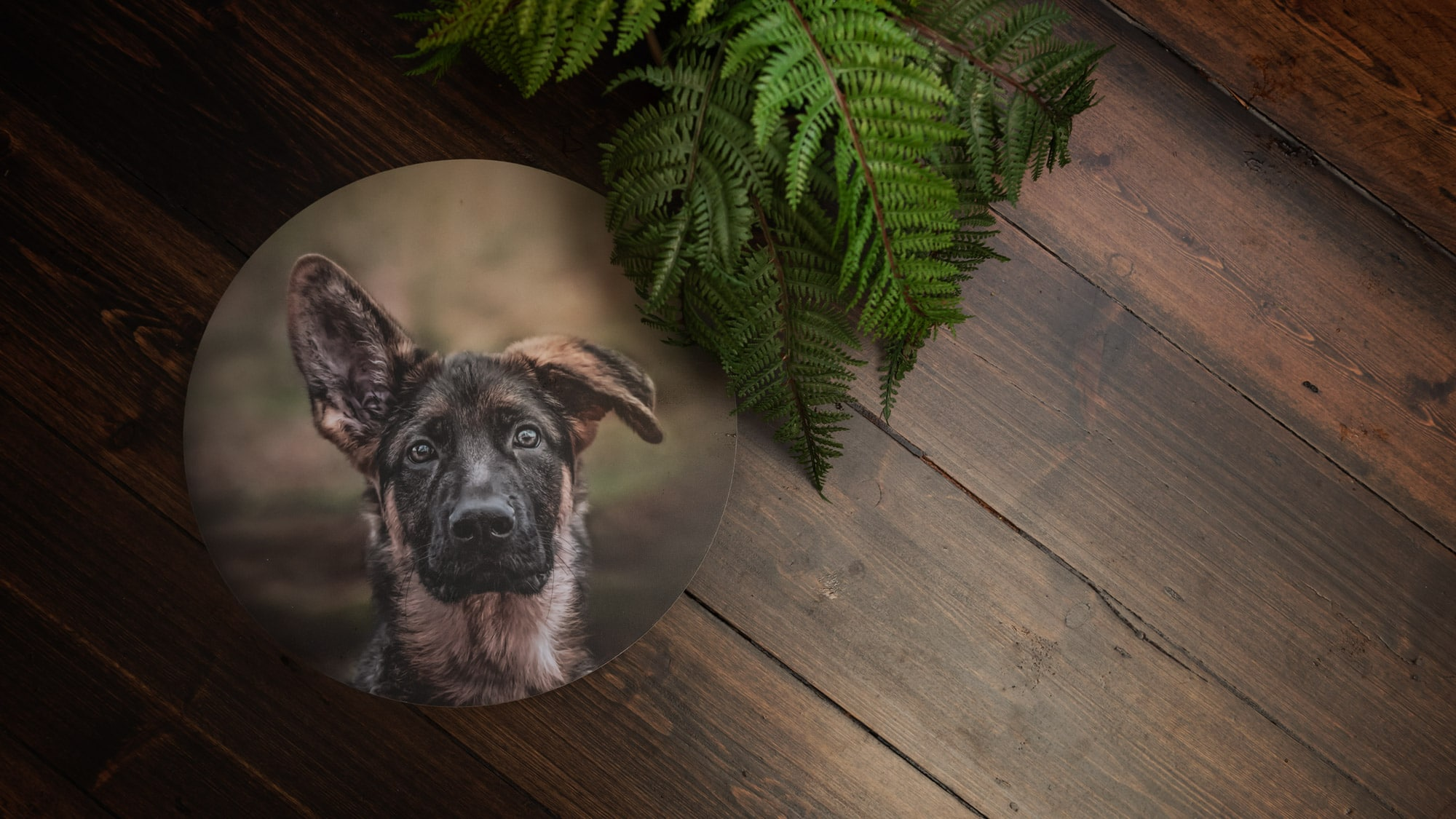 Nic Bisseker Photography Dog products East Grinstead