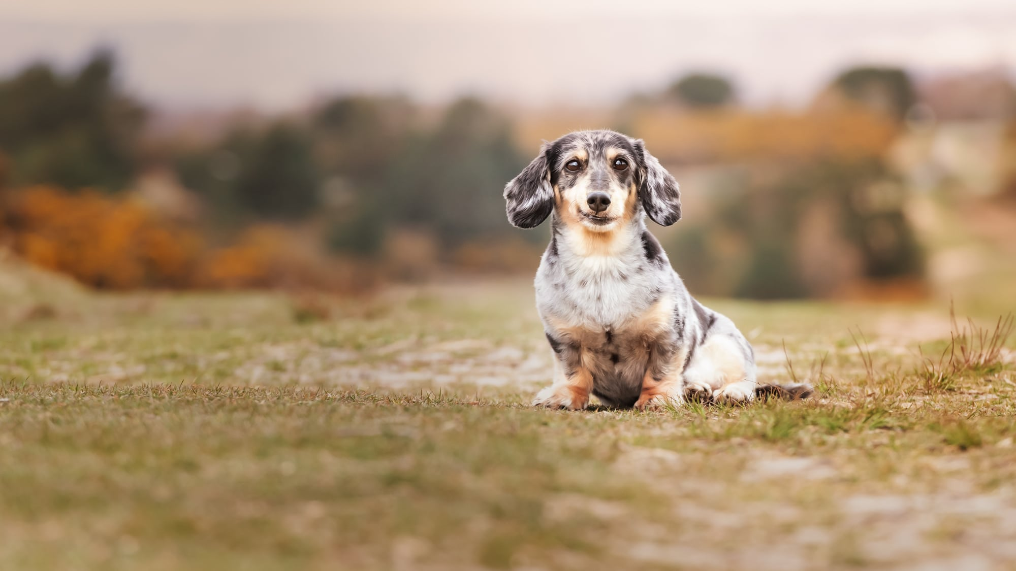 Nic BIsseker photography keeping dogs cool in the sun