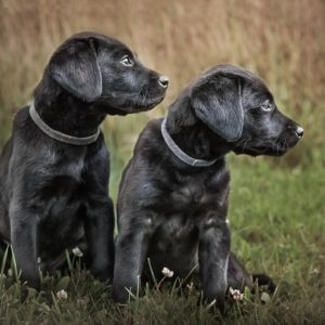 Pet portraits – puppy photoshoots with Nic Bisseker Photography West Sussex Dog Photographer