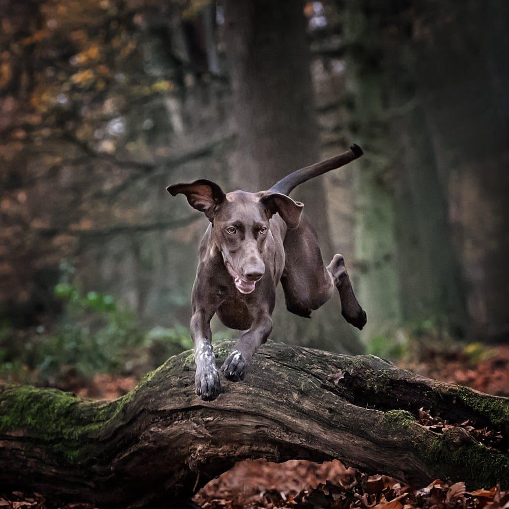 Dog photographer Surrey Kent Sussex