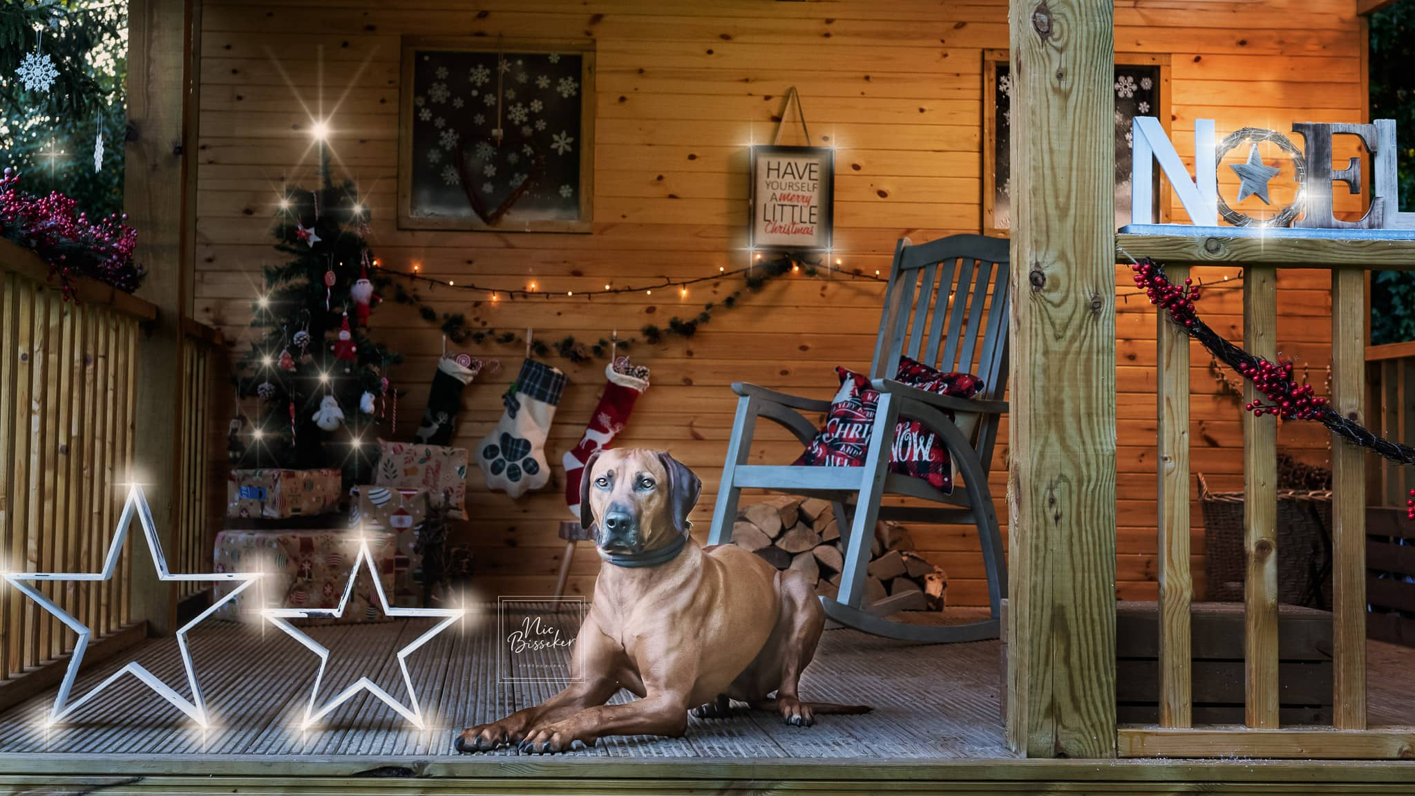 nic bisseker photography dog christmas mini sessions