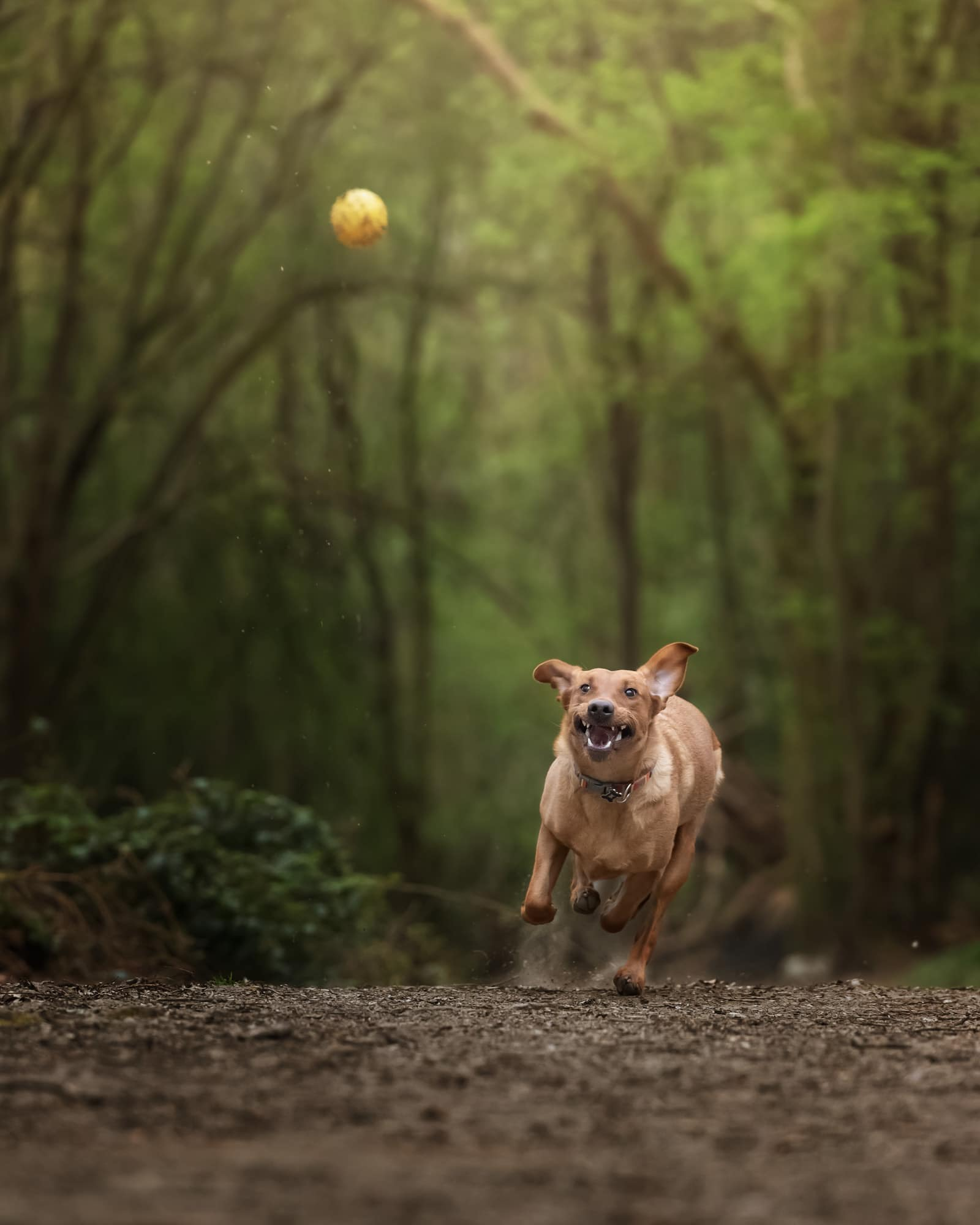 Nic Bisseker Photography Dog photoshoot East Grinstead gift vouchers