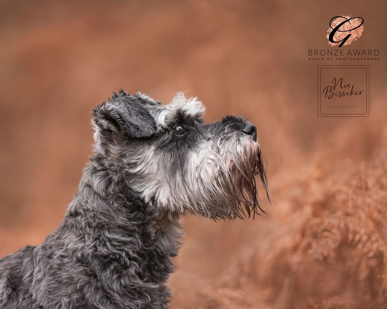 Nic Bisseker Photography Dog photoshoot Tunbridge Wells