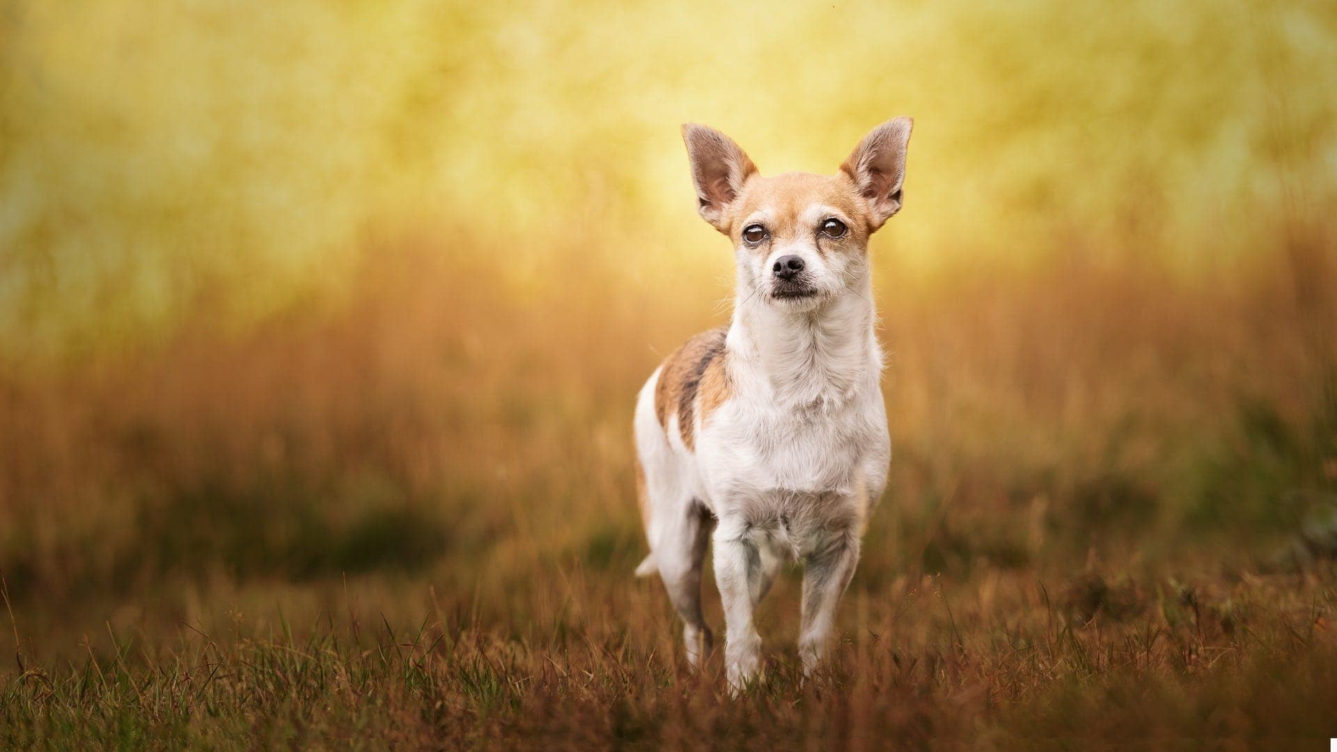 Nic Bisseker Photography Dog photographer East Grinstead