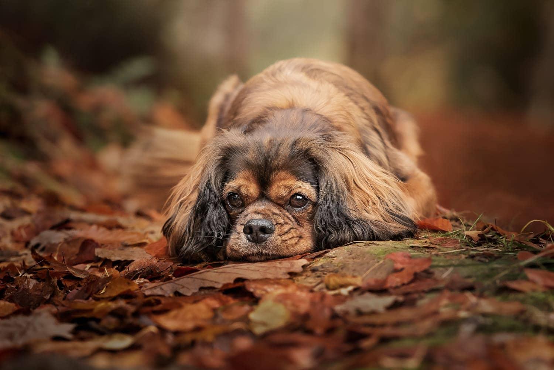 Dog photographer East Grinstead