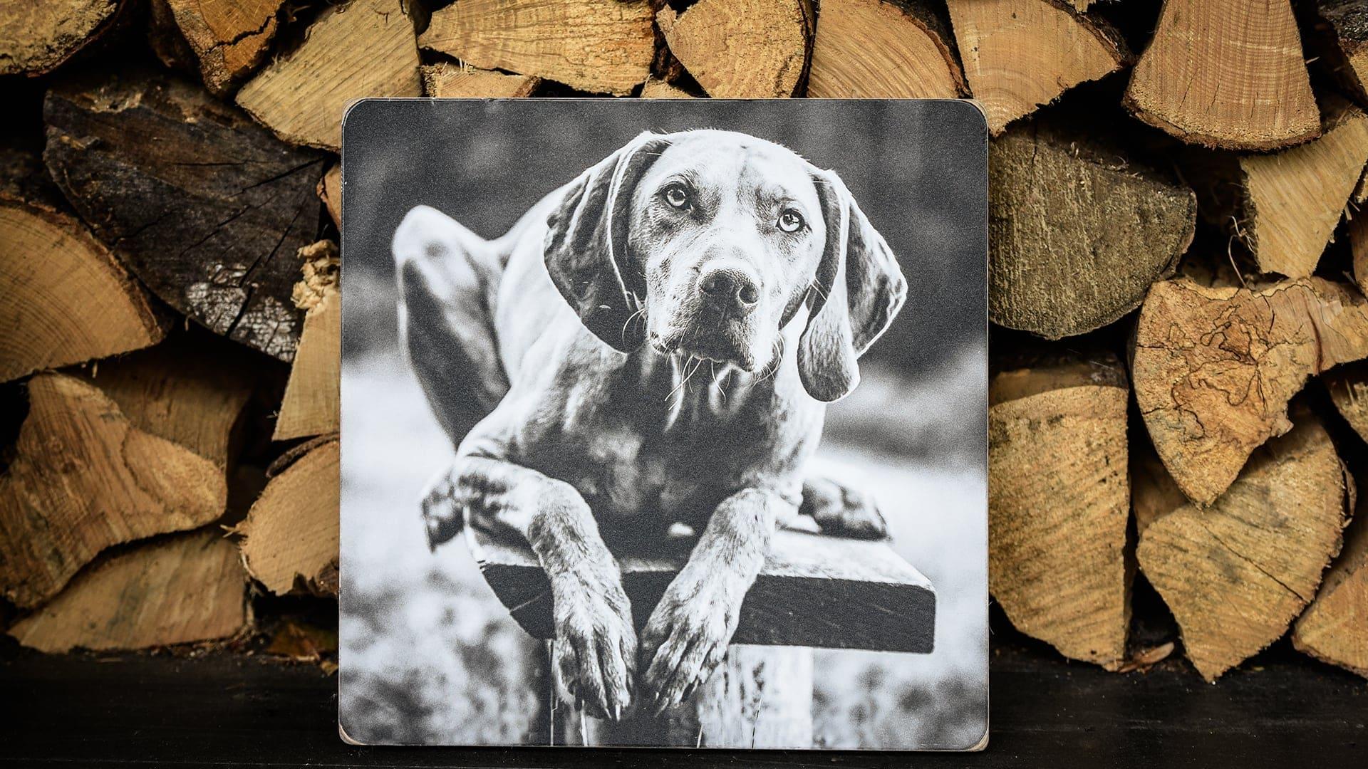 Dog photographs Surrey Sussex Kent