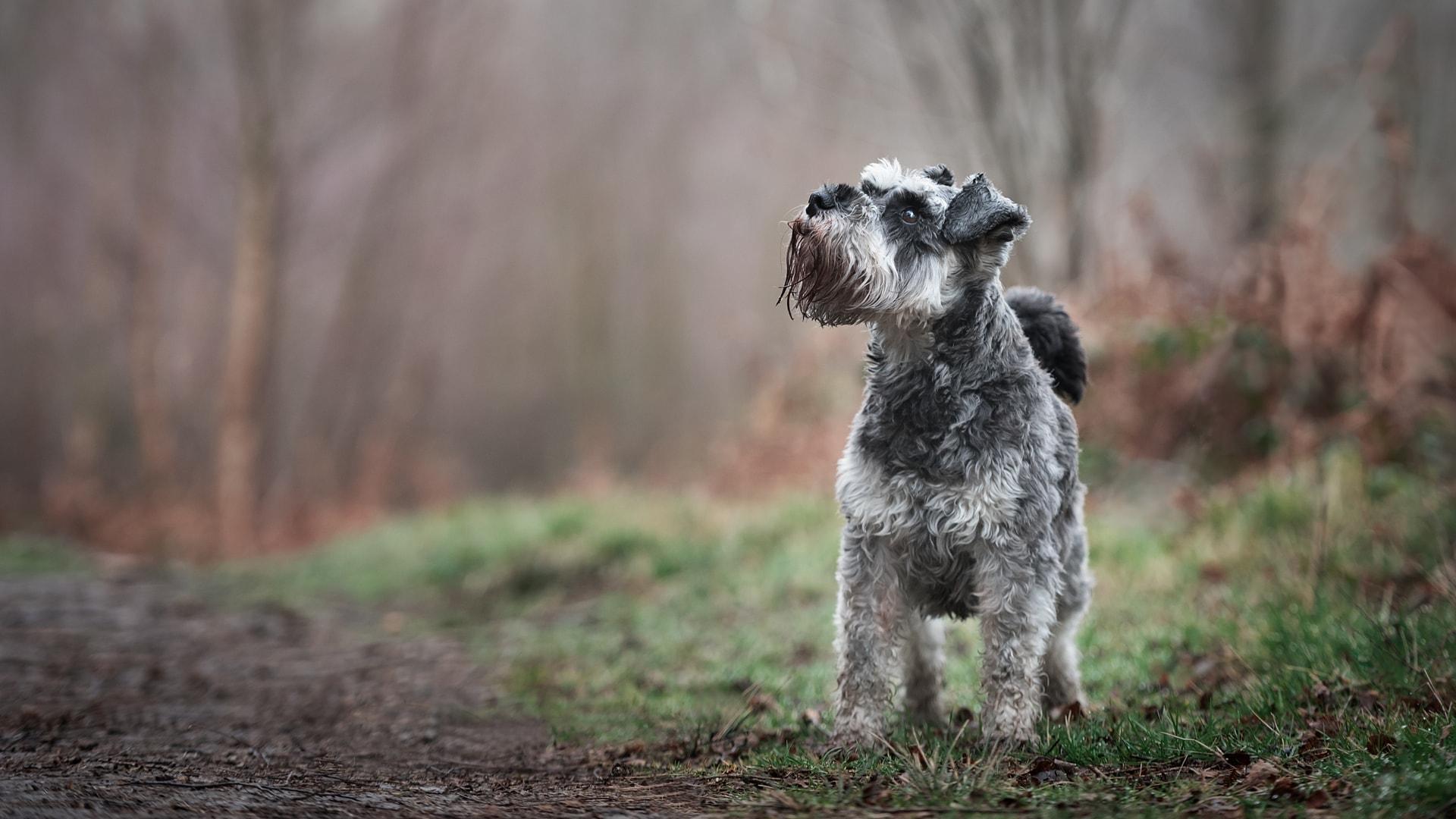 Nic Bisseker Dog Photographer - Autumn Outdoor Photoshoot