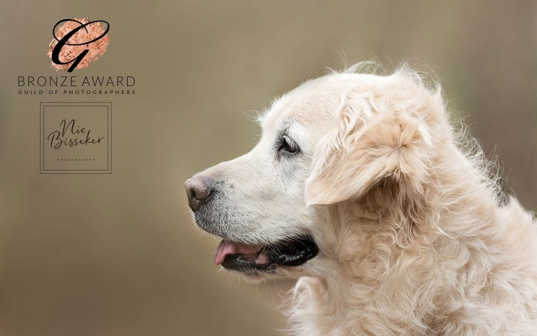 Dog Photoshoot Mini Sessions in Tunbridge Wells Oxted and Uckfield
