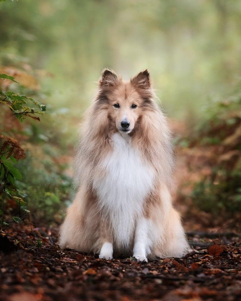 Nic Bisseker Photography Dog photographer East Grinstead