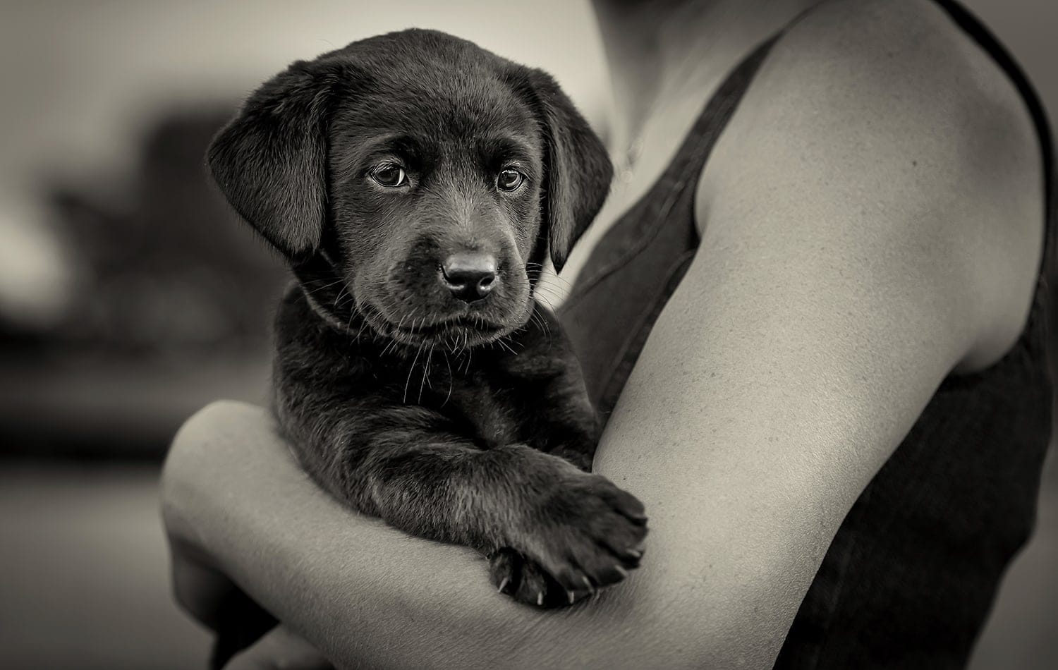Nic Bisseker Photography puppy photography West Sussex