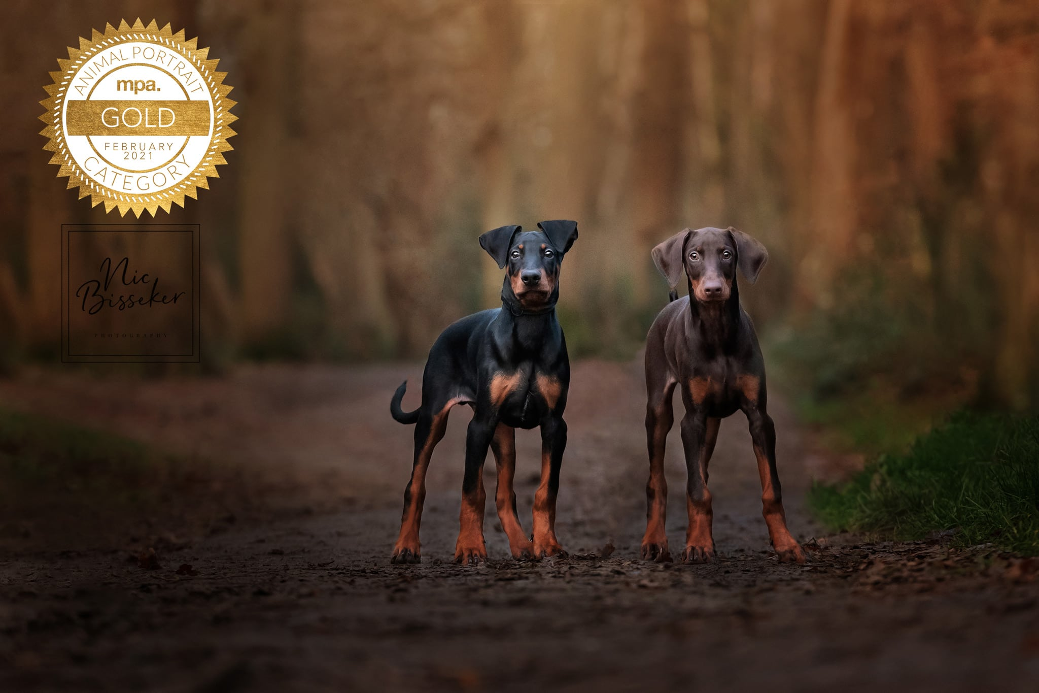 Nic Bisseker Photography Dog photographer West Sussex