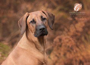Dog photoshoot Sussex