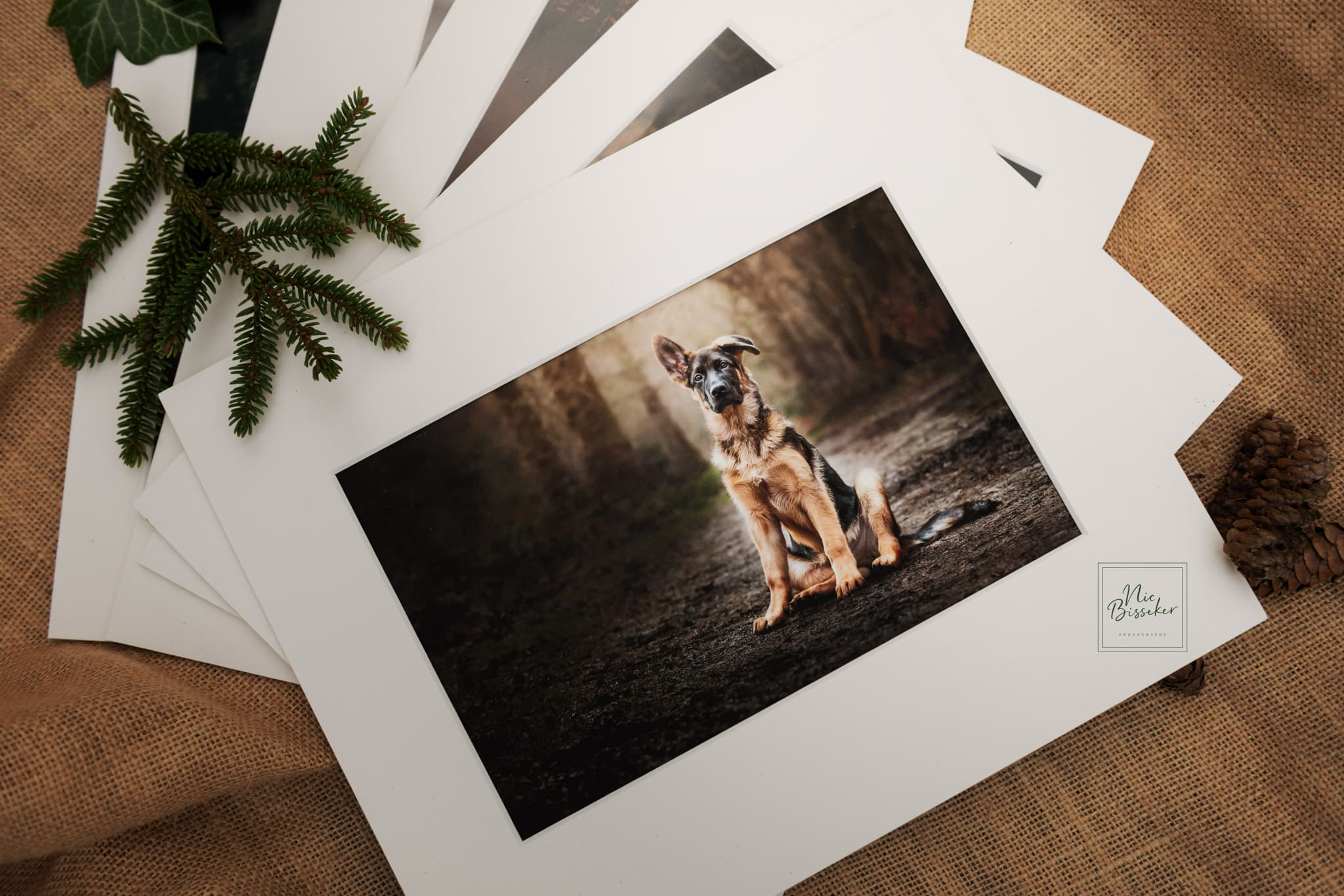 Nic Bisseker Photography Dog portraits East Grinstead