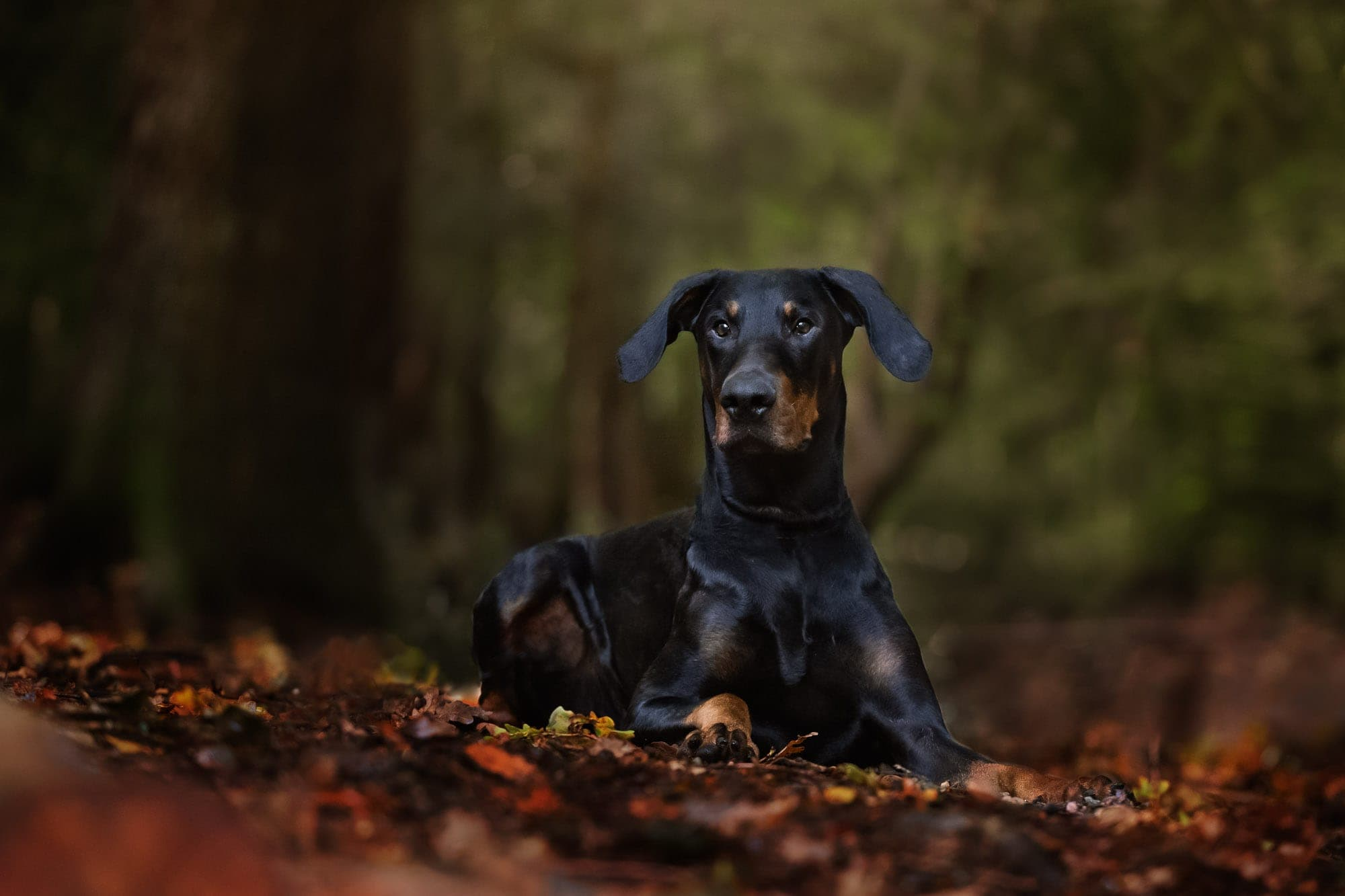 Nic Bisseker Photography Dog photographer Sussex