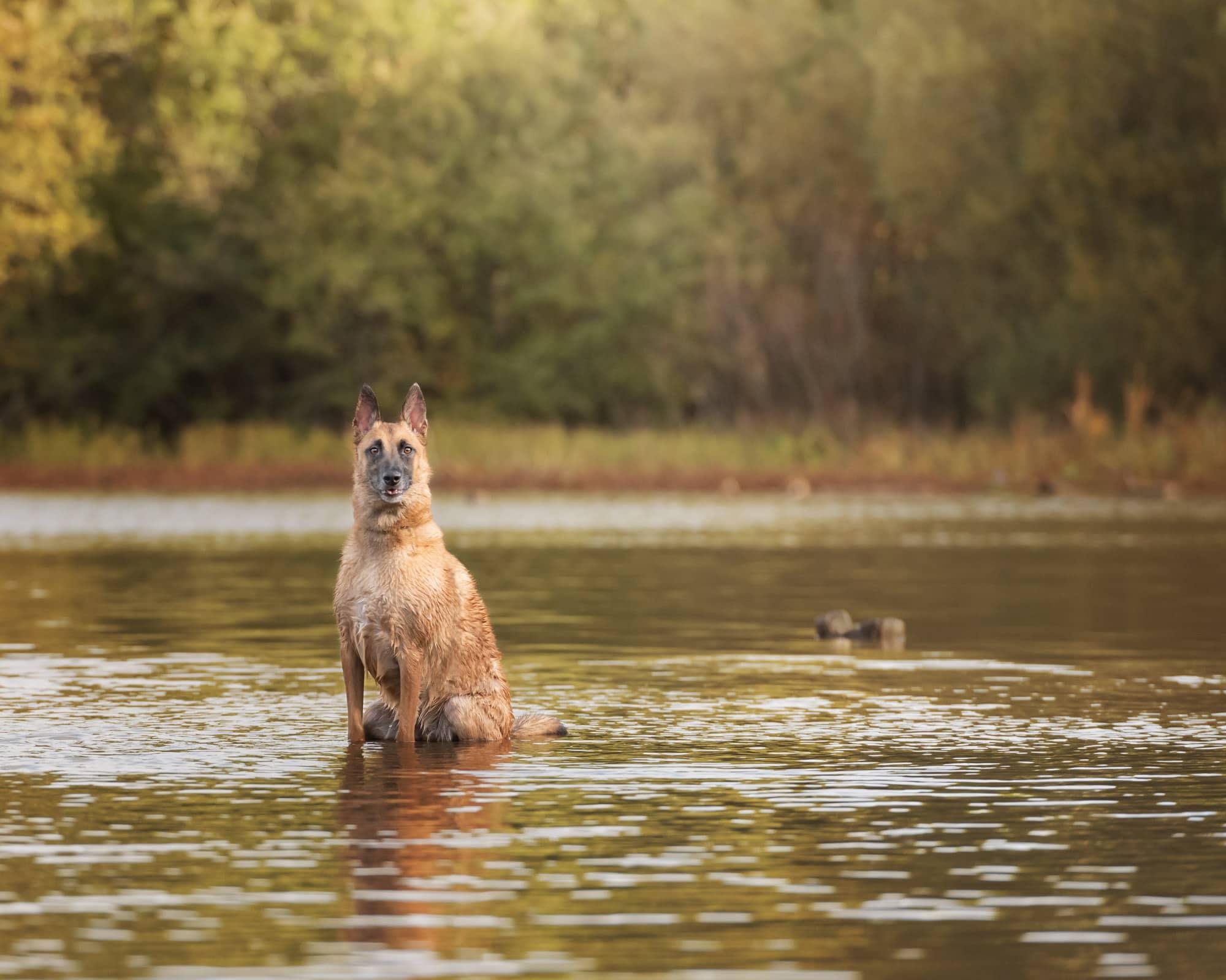 Nic Bisseker Photography rescue dog photoshoot Surrey