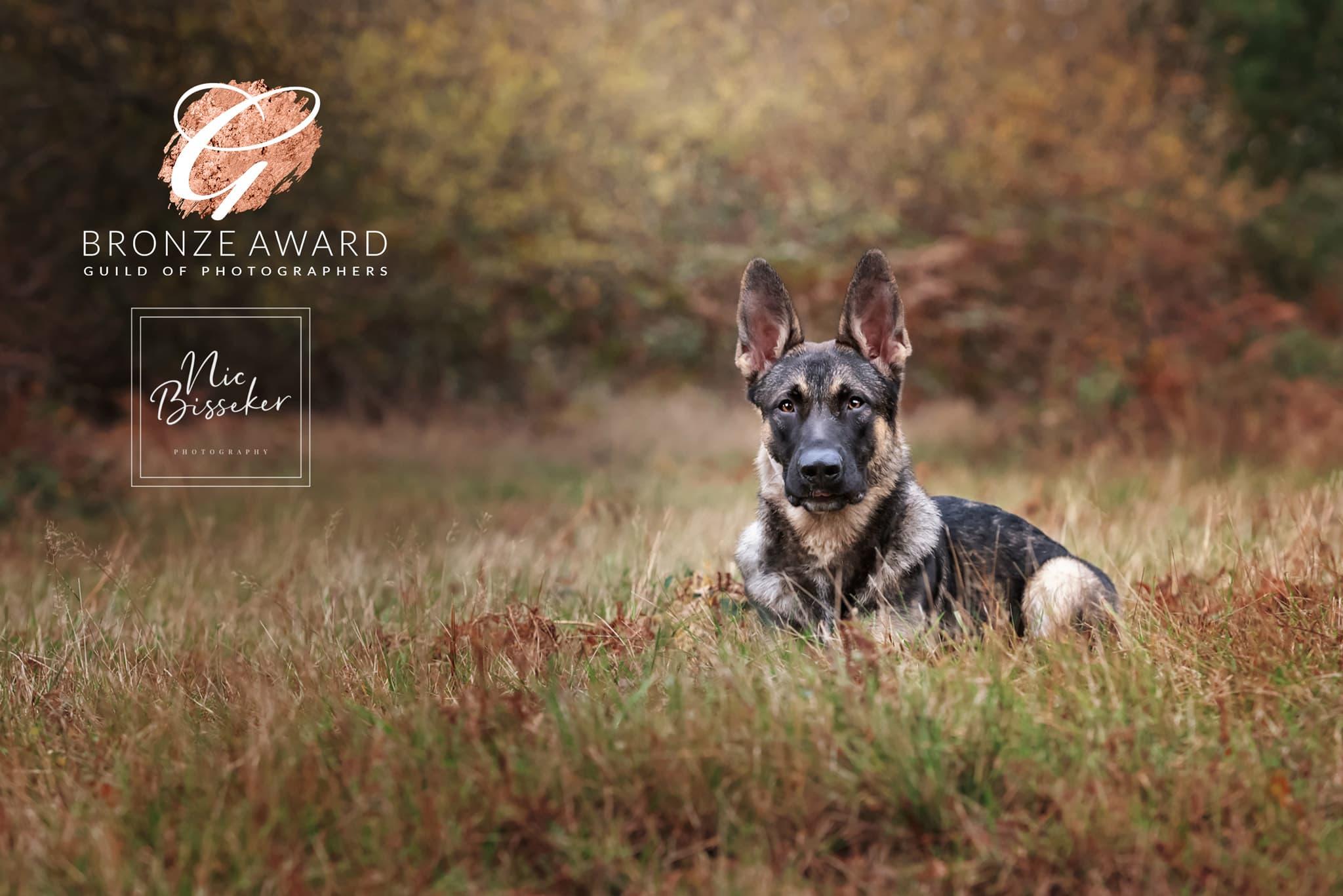 Nic Bisseker Photography dog photographer Tunbridge Wells