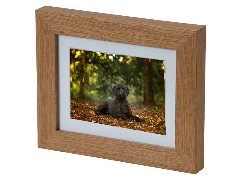 tribute frame for pet cremation with professional dog portrait