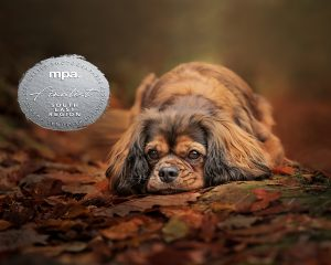Nic Bisseker Photography Dog photographer East Grinstead pet photographer of the year finalist award