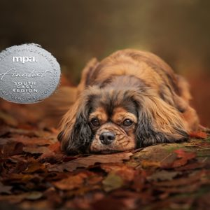 MPA Up and Coming Runner Up Finalist Pet Photographer of the Year – South East Region