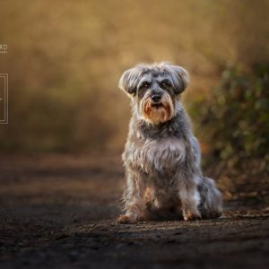 Autumn 2020 Dog Photography Mini Sessions – Location Days Tunbridge Wells and The Ashdown Forest