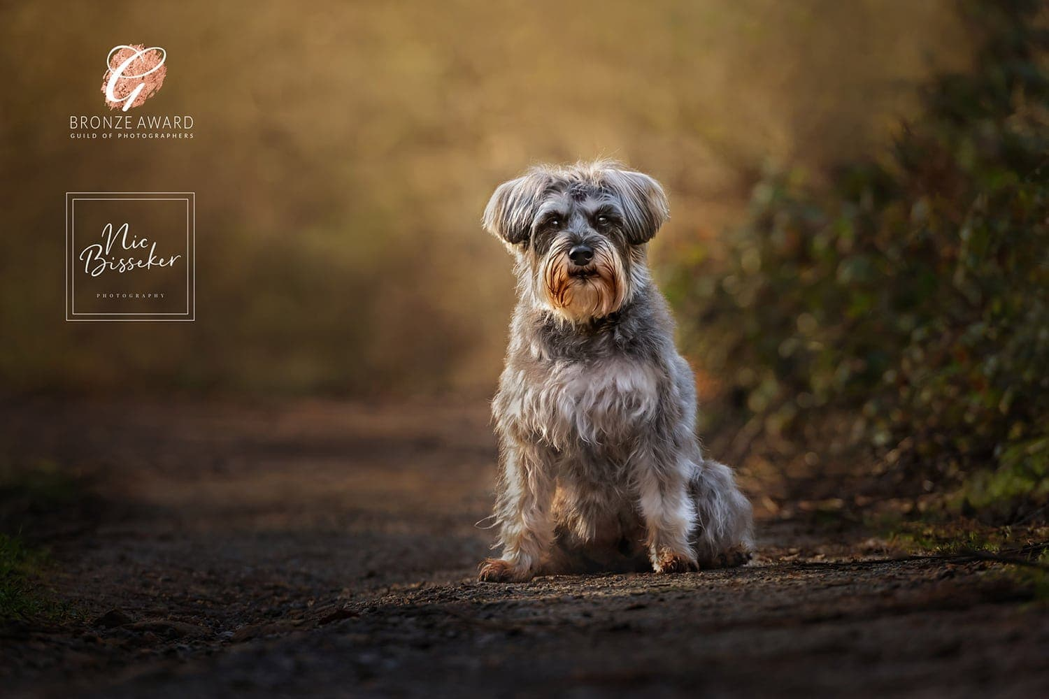 Nic Bisseker Photography Dog photography gift voucher valentines day