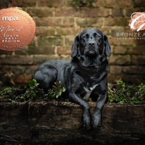 Dog Photography Mini Sessions – Location Days across Sussex, Surrey and Kent