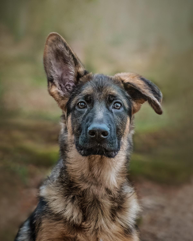 Nic Bisseker Photography Dog photographerSussex